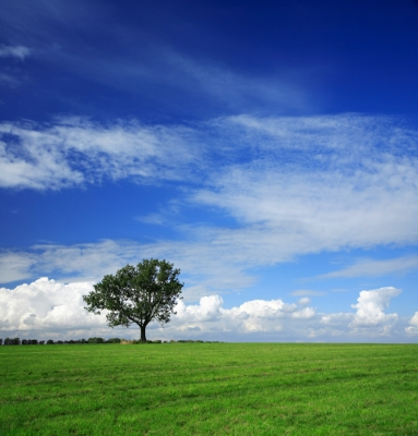 Clouds over a single tree in a green field of grass.