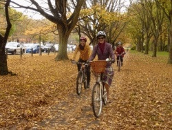 Three cyclists on a pathway in Hagley Park strewn with autumn leaves.